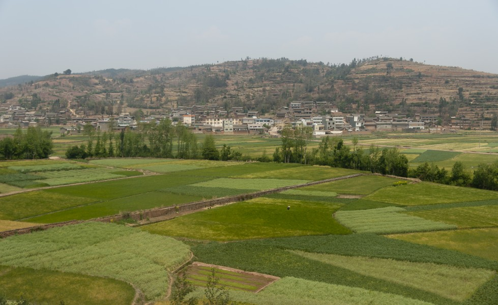 Yunnan China Farmer-in-his-grainfield-02