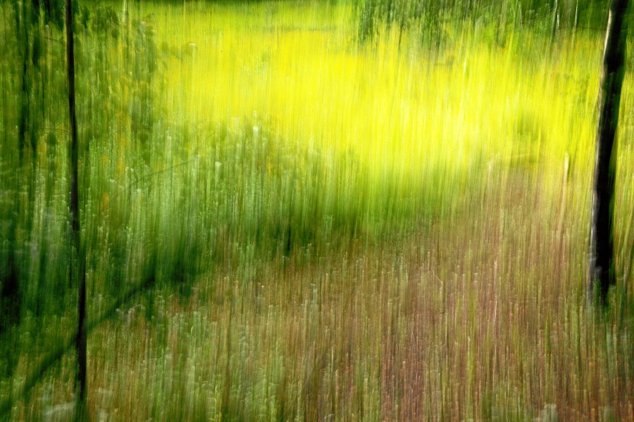 Zeche Zollverein trees and grass ICM impression
