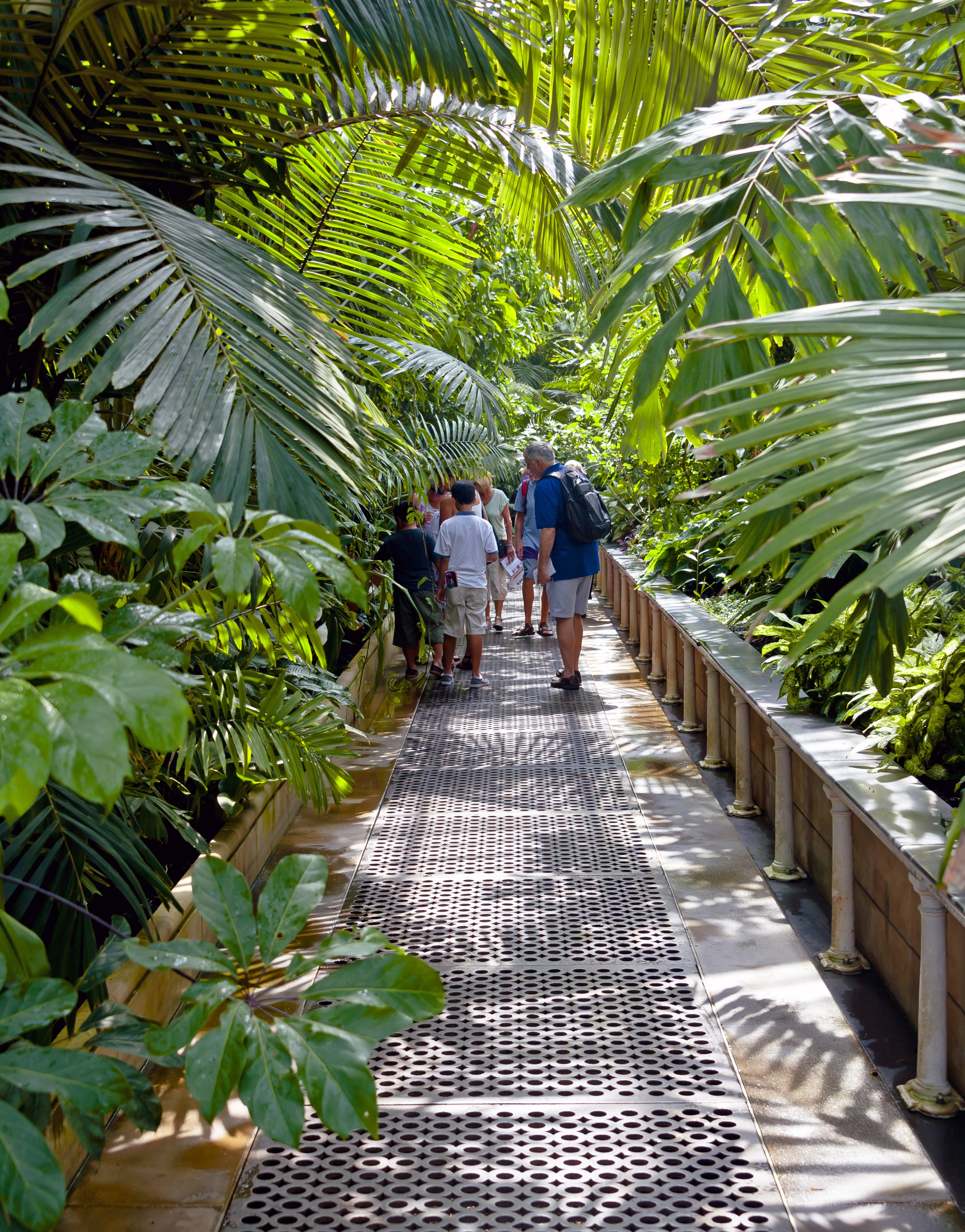 Walkway through palms in Palm House, Kew Gardens