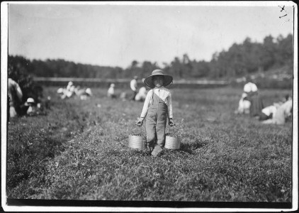 Belford Coldos, 8 years old, picking on Weeks' Bog. Falmouth, Mass. - NARA - 523461