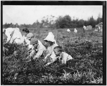 Richard Tevor, 8 years old. 5 years picking cranberries. Theodore Budd's Bog at Turkeytown, N.J. This is the fourth... - NARA - 523258