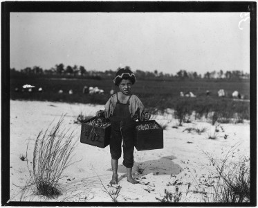 Salvin Nocito, 5 years old, carries 2 pecks of cranberries for long distance to the bushel man. Whites Bog. Brown... - NARA - 523267