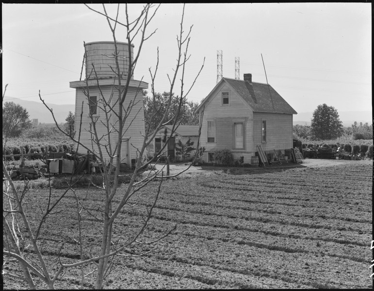 Centerville, California. Japanese- owned loganberry farm. The family are preparing to evacuate. T . . . - NARA - 536023