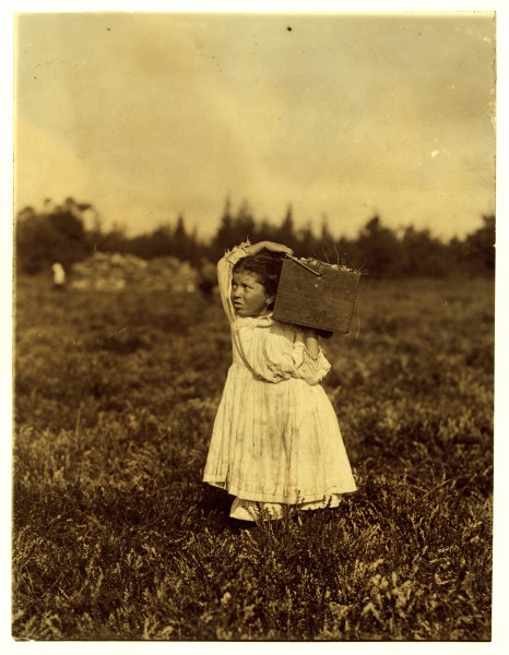 Lewis Hine, Jennie Camillo, 8 years, cranberry picker, Pemberton, New Jersey, 1910