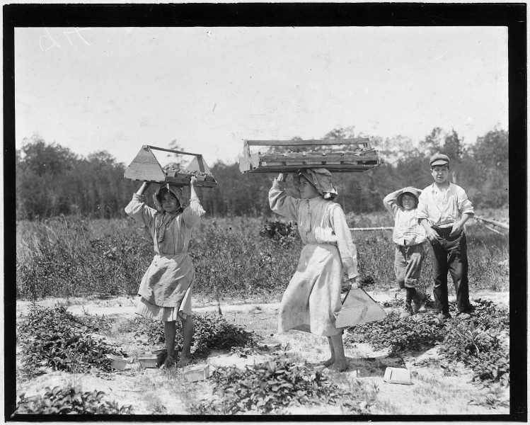 The girl berry carriers on Newton's Farm. Ann Parion, 13 years of age, working her 5 season, carries 60 Lbs. of... - NARA - 523321