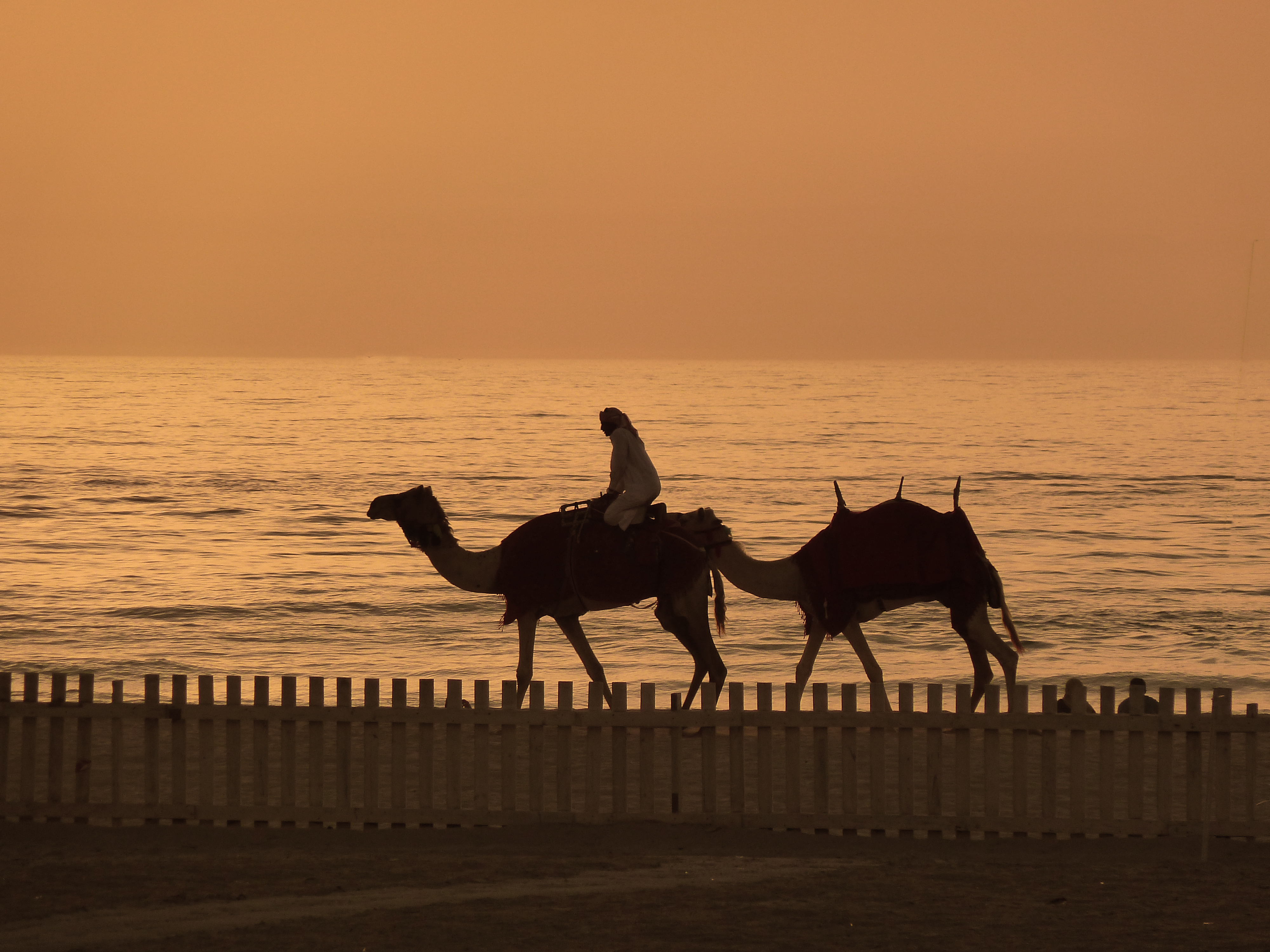 Camels at Sunset (8667409717)
