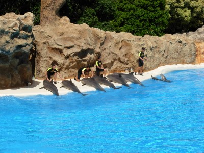 Dolphins at Loro Parque 01
