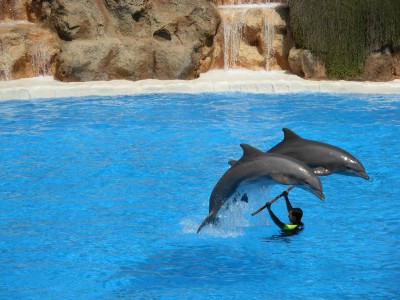 Dolphins at Loro Parque 04