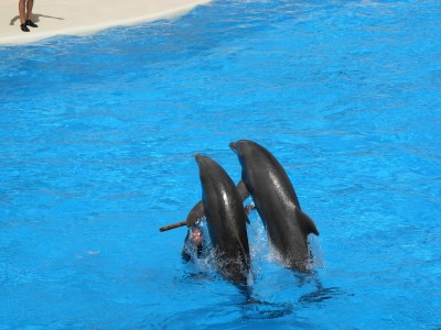 Dolphins at Loro Parque 07