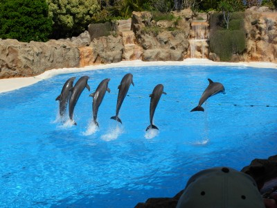 Dolphins at Loro Parque 09