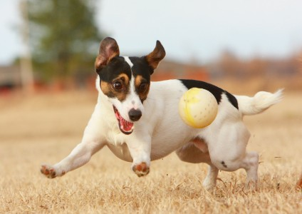 JRT with Ball