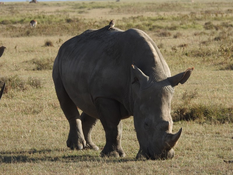 A day with Rhino, Rift Valley