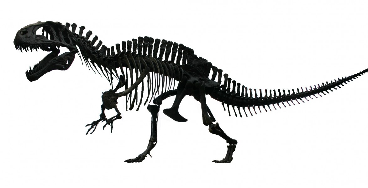 Acrocanthosaurus white background