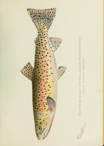 Annual report of the Commissioners of Fisheries, Game and Forests of the State of New York (1896) (14565751410)