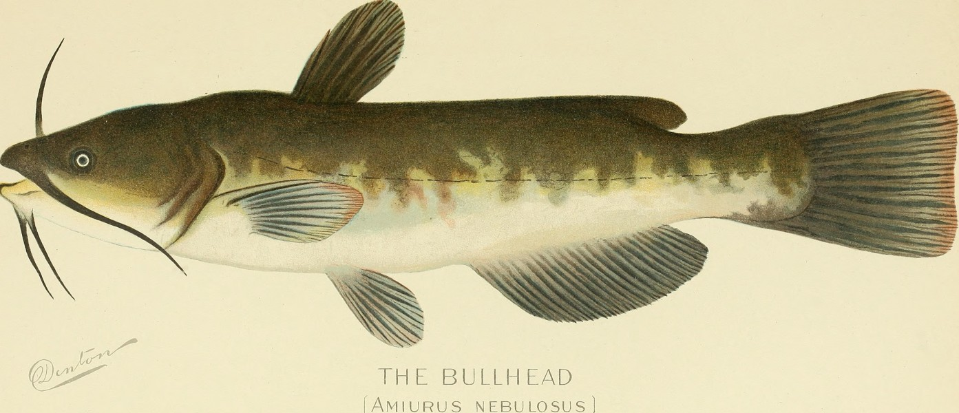 Annual report of the Commissioners of Fisheries, Game and Forests of the State of New York (1898) (18245123378)