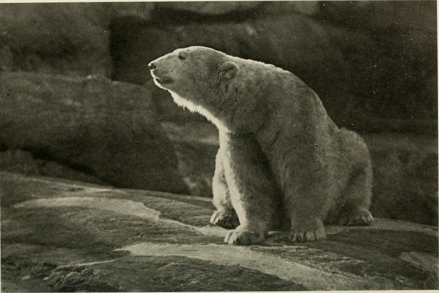 Annual report of the New York Zoological Society