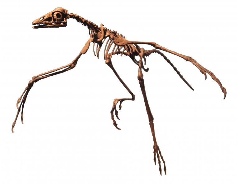 Archaeopteryx Philadelphia white background