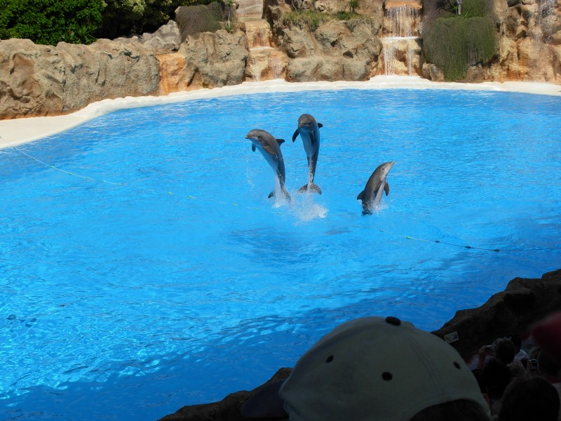 Dolphins at Loro Parque 08