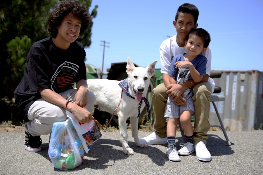 Families find new furry friends at adoption event 140726-M-DN141-006