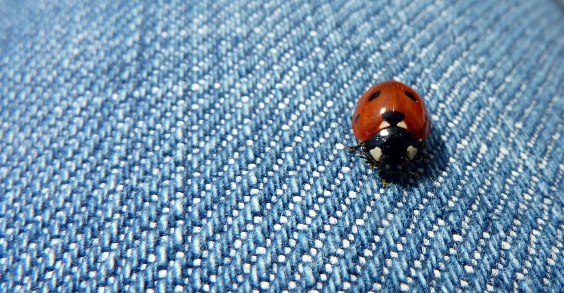 Ladybird on my leg (5946815261)