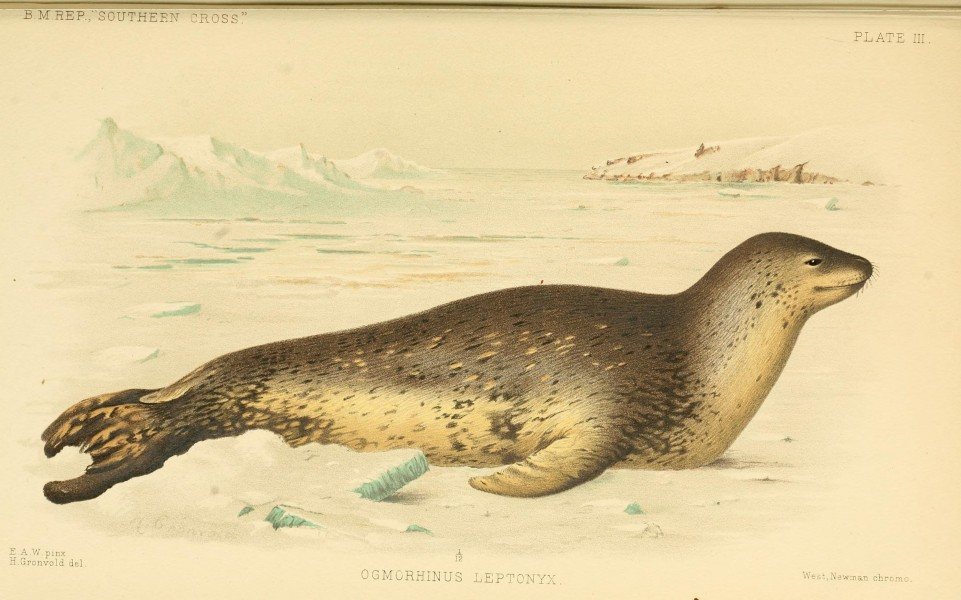 Report on the collections of natural history made in the Antarctic regions during the voyage of the