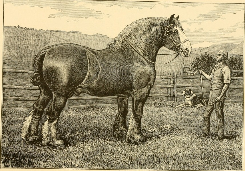 The breeds of live stock, and the principles of heredity (1887) (14594418610)