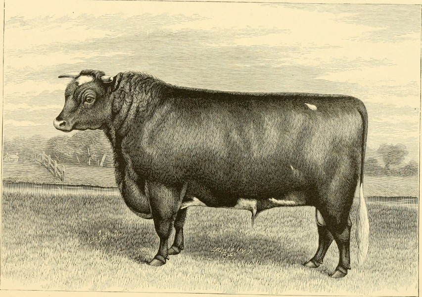 The breeds of live stock, and the principles of heredity (1887) (14594506090)