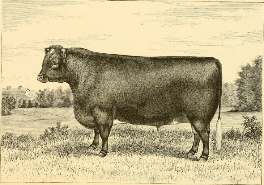 The breeds of live stock, and the principles of heredity (1887) (14594532470)
