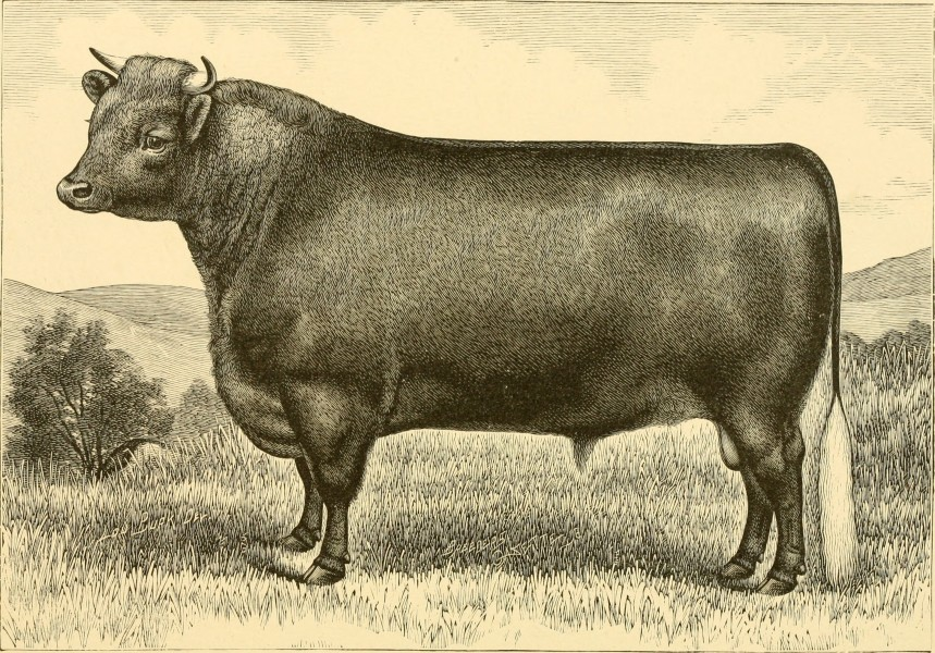 The breeds of live stock, and the principles of heredity (1887) (14594589089)