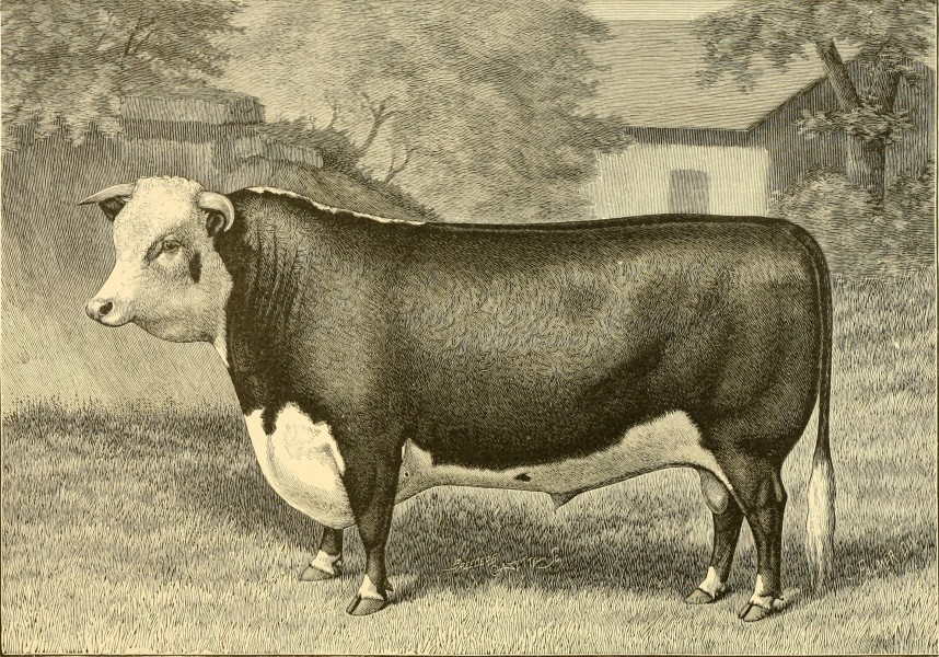 The breeds of live stock, and the principles of heredity (1887) (14594621009)