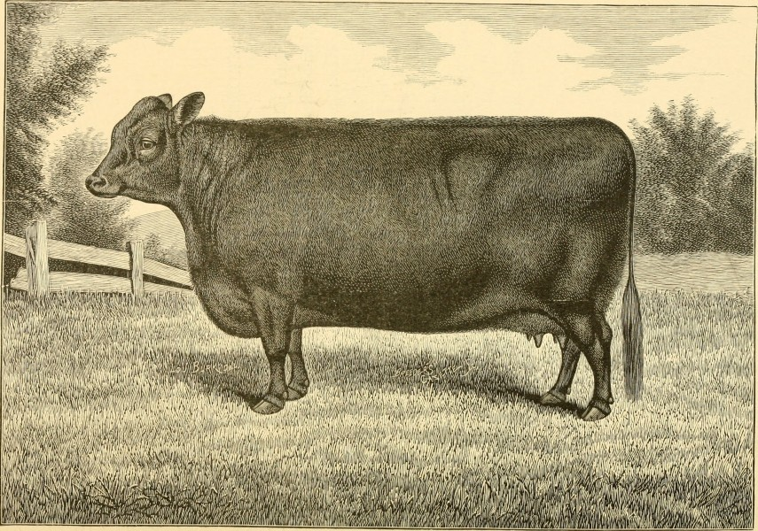 The breeds of live stock, and the principles of heredity (1887) (14594627850)