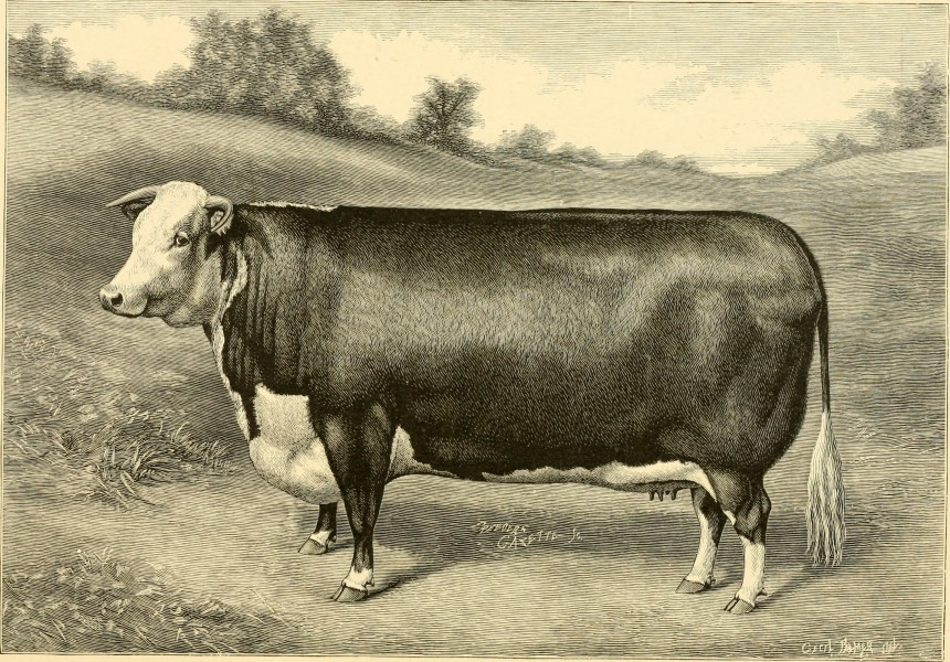 The breeds of live stock, and the principles of heredity (1887) (14594652109)