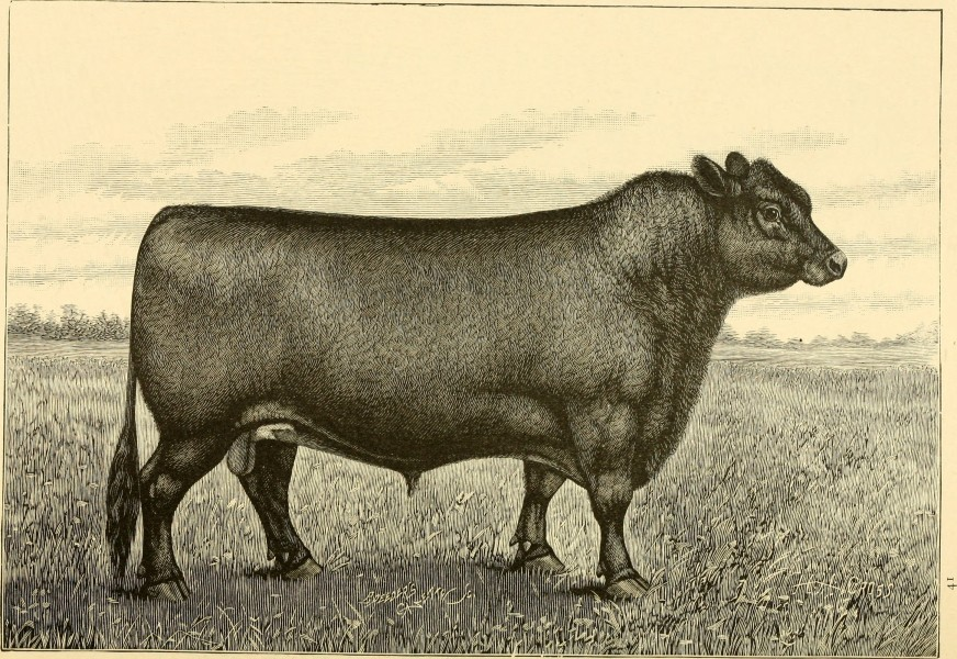 The breeds of live stock, and the principles of heredity (1887) (14594675769)
