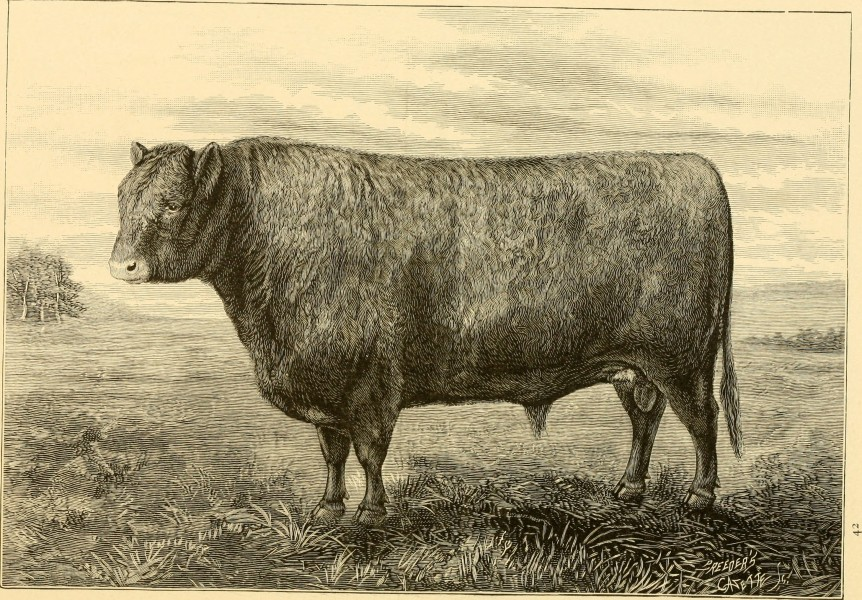 The breeds of live stock, and the principles of heredity (1887) (14594679249)