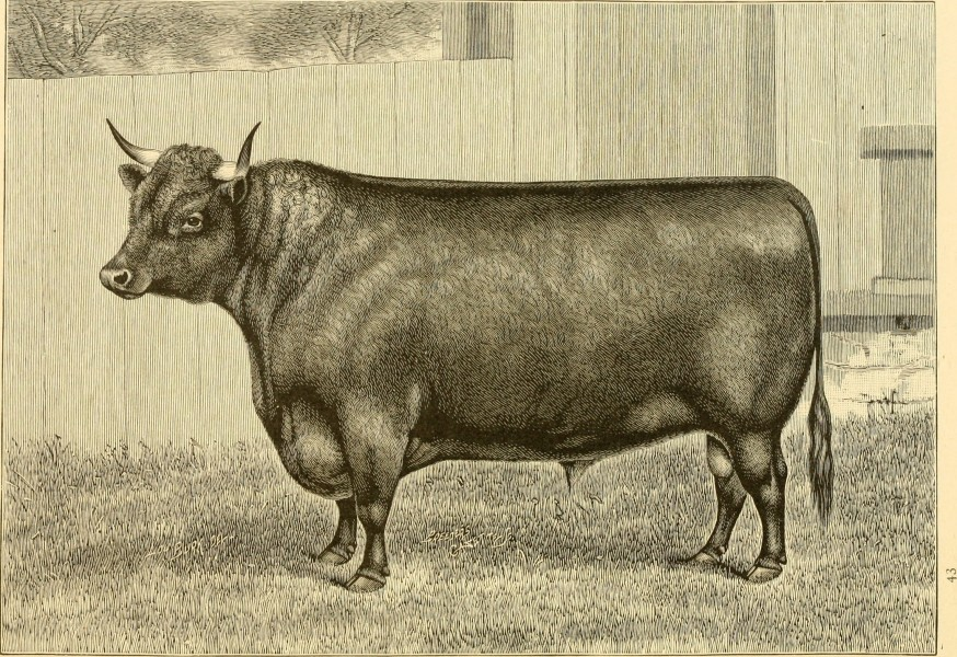 The breeds of live stock, and the principles of heredity (1887) (14594684209)