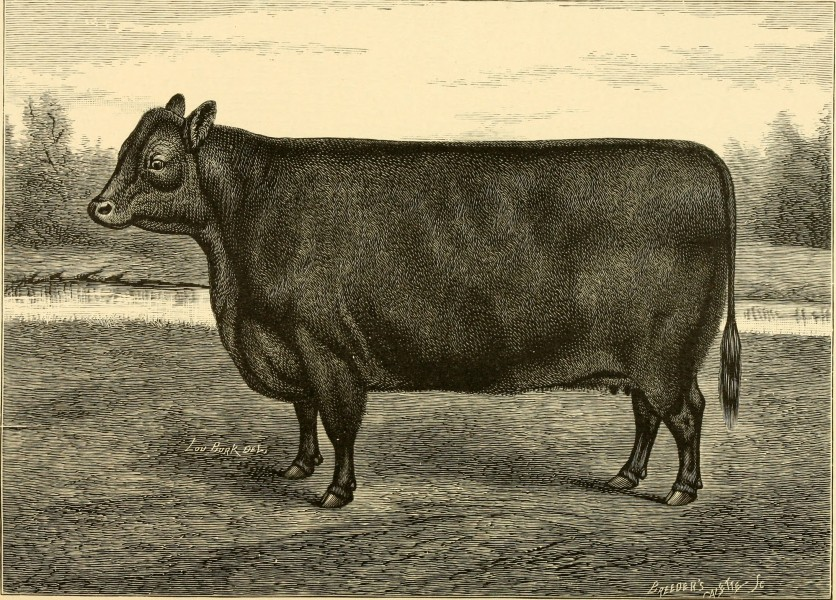 The breeds of live stock, and the principles of heredity (1887) (14594697708)
