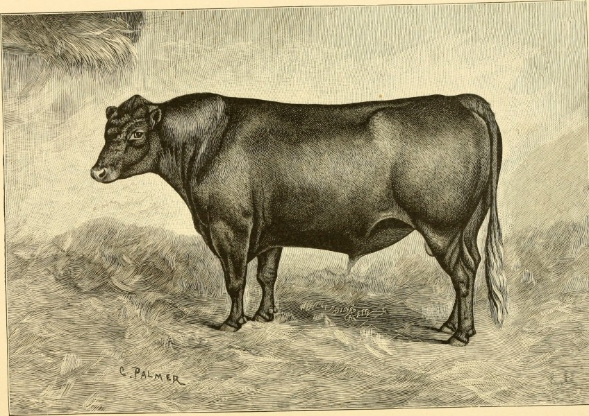 The breeds of live stock, and the principles of heredity (1887) (14594700599)