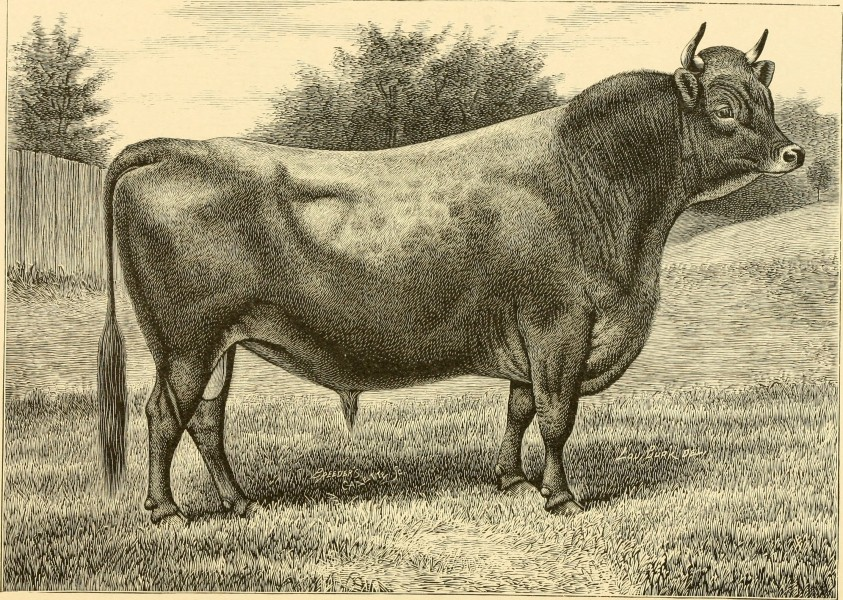 The breeds of live stock, and the principles of heredity (1887) (14594714500)