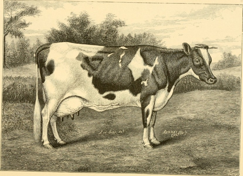 The breeds of live stock, and the principles of heredity (1887) (14594728019)