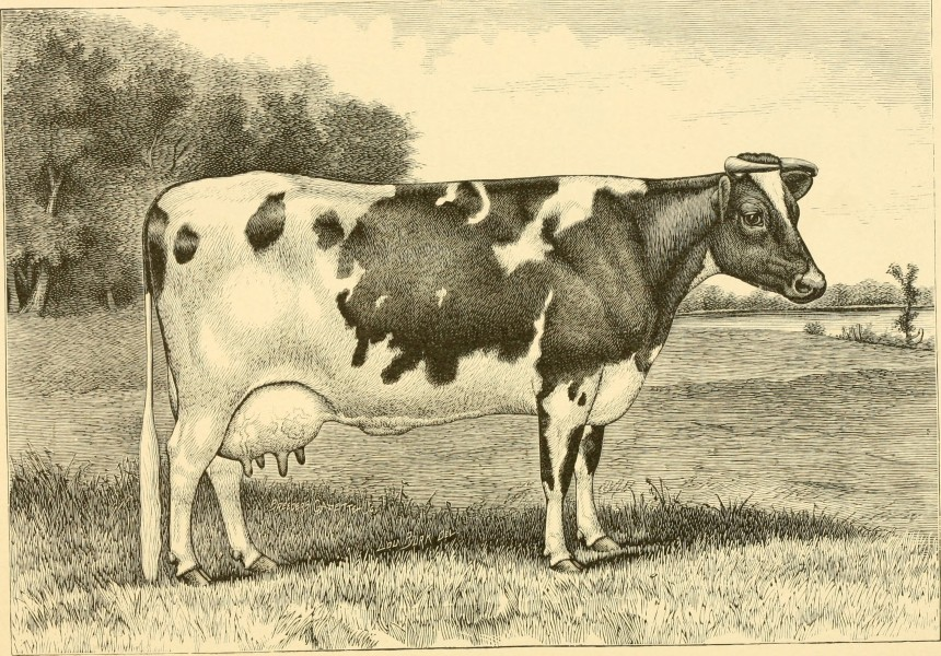 The breeds of live stock, and the principles of heredity (1887) (14594729689)