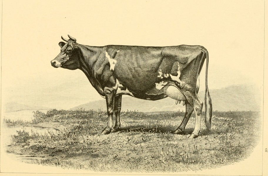 The breeds of live stock, and the principles of heredity (1887) (14594751039)