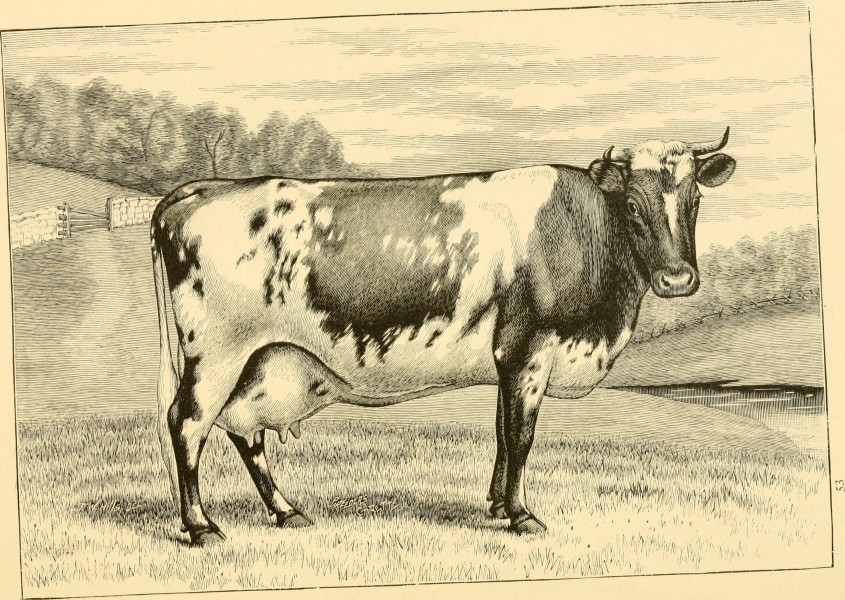 The breeds of live stock, and the principles of heredity (1887) (14594782339)