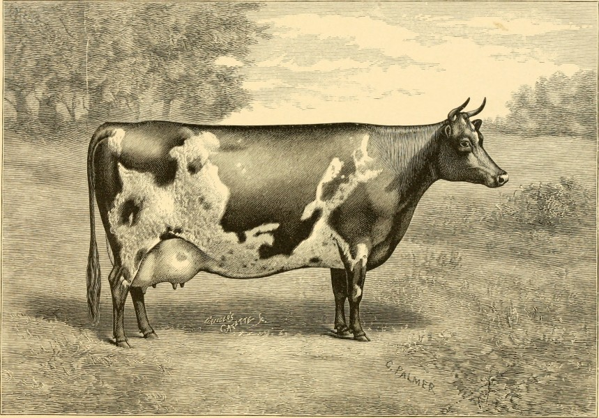 The breeds of live stock, and the principles of heredity (1887) (14594811328)