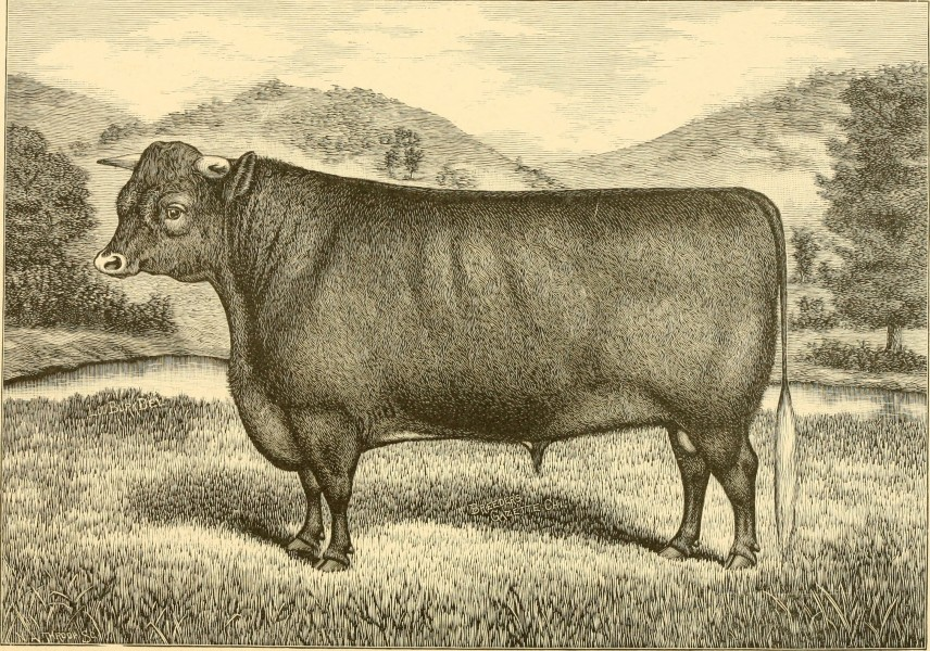The breeds of live stock, and the principles of heredity (1887) (14594857267)