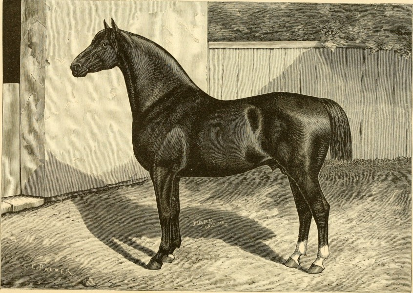 The breeds of live stock, and the principles of heredity (1887) (14758131436)
