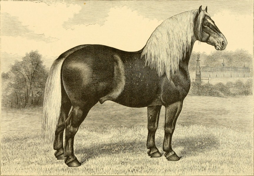 The breeds of live stock, and the principles of heredity (1887) (14758186536)