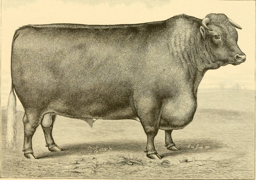 The breeds of live stock, and the principles of heredity (1887) (14758245936)