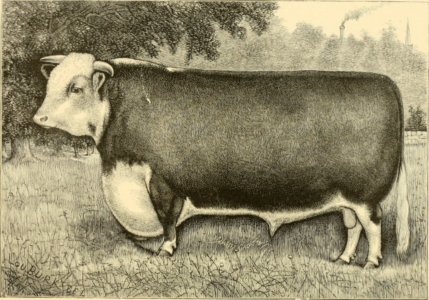 The breeds of live stock, and the principles of heredity (1887) (14758279086)