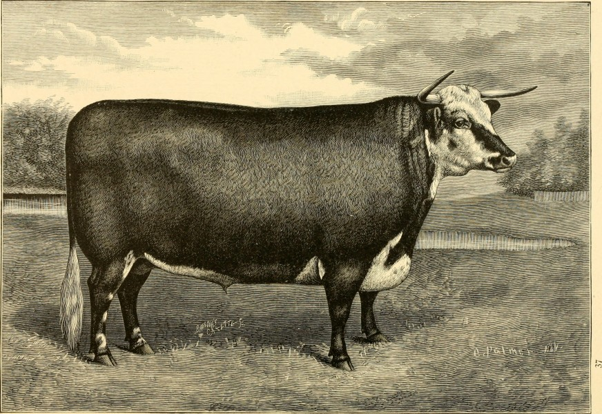 The breeds of live stock, and the principles of heredity (1887) (14758325296)