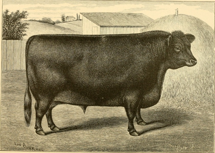 The breeds of live stock, and the principles of heredity (1887) (14758348426)